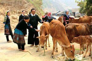 Việt Nam: Ấn tượng trong Phát triển con người và Xóa đói giảm nghèo
