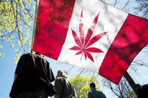 Sau Uruguay, tới lượt Canada hợp pháp hóa cần sa giải trí
