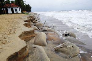 Quảng Nam: 12,5 tỷ đồng thực hiện kè khẩn cấp chống xâm thực bờ biển Cửa Đại