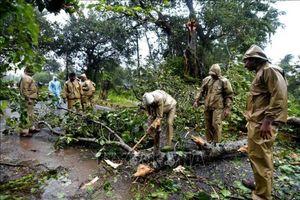Ấn Độ: Bão Titli 'càn quét', ít nhất 57 người thiệt mạng