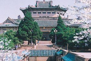Mê mệt với vẻ đẹp tựa tranh vẽ của ngôi trường được mệnh danh là 'Đại học hoa anh đào' ở Trung Quốc