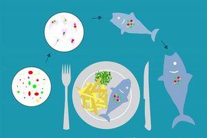 Cảnh báo nguy cơ hạt nhựa siêu nhỏ xâm nhập chuỗi thực phẩm