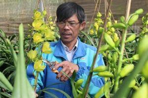 'Bậc thầy' trồng địa lan Đà Lạt chia sẻ 'bí kíp' để ra hoa siêu đẹp