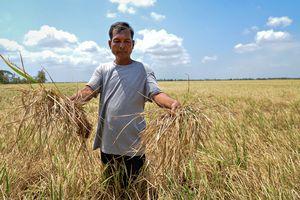 Cảnh báo nguy cơ suy thoái tài nguyên đất ở Đồng bằng sông Cửu Long