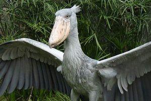 Những loài chim kỳ dị sở hữu chiếc mỏ 'quái' nhất TGĐV