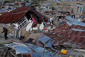 Ly kỳ chuyện động vật có thể dự báo được động đất