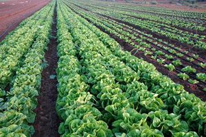 Đồng Nai: Lập đề án ứng dụng nông nghiệp công nghệ cao của Israel