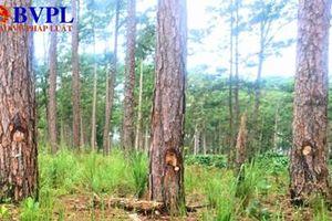 Khởi tố 2 vụ án doanh nghiệp để mất rừng