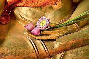 Biểu tượng hoa sen trong Phật giáo