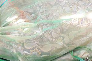 Cặp trăn gấm quý nặng 28kg dài khoảng 7m được thả về khu bảo tồn thiên nhiên