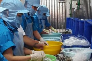 Hiệp định Thương mại tự do Việt Nam - EU (EVFTA): Mang lợi ích cho cả đôi bên