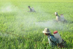 Chi 989 triệu USD chỉ để nhập thuốc bảo vệ thực vật