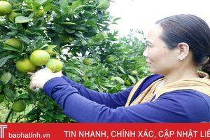 Vùng cam ngon nhất Hà Tĩnh vào mùa hái quả, ước thu 100 tỷ đồng