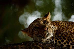 Những bức ảnh về thiên nhiên hoang dã đẹp nhất năm 2018