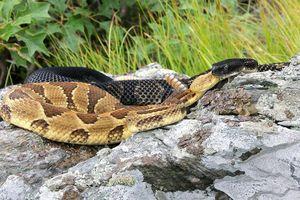Người đàn ông sống sót giữa bầy rắn trong 2 ngày mắc kẹt dưới lòng đất