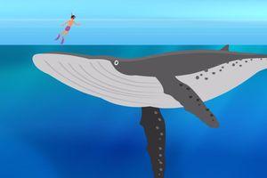 Đại dương sâu tới mức nào?