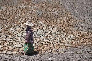 Hạn hán hoành hành tại miền Đông Bắc Thái Lan