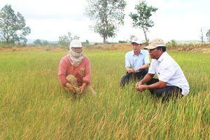 Đắk Lắk: Khô hạn giữa mùa mưa
