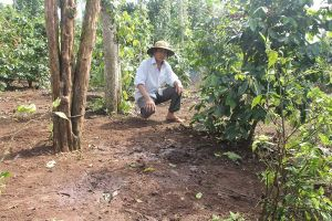 Quảng Trị: Trộm cắt mất 4 chân con bò, nông dân xót xa