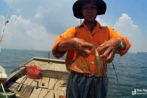 Ngư dân Nghệ An 'săn' cá đục thu tiền triệu mỗi ngày