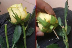 Bông hồng lừa đảo trong ngày 20/10 khiến nhiều người 'chẳng dám tin ai'
