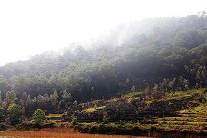 Công bố quyết định thanh tra toàn diện quá trình quản lý, sử dụng đất rừng Sóc Sơn