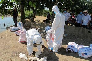 Bùng phát dịch cúm gia cầm ở Đắk Lắk
