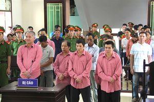 9 bị cáo vụ phá rừng lớn nhất Bình Định lĩnh án 81 năm tù