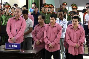 Tòa tuyên án các bị cáo trong vụ phá rừng lớn nhất Bình Định