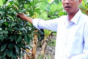 'Ngả mũ' trước lão nông trồng lúa trăm vụ trăm trúng