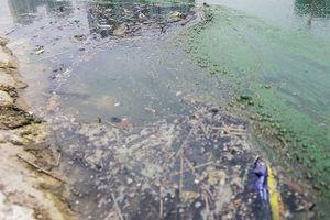 Công viên 300 tỷ nổi váng, bốc mùi là do tảo, cây dại phân hủy