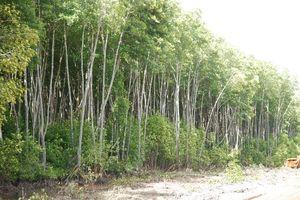 Bến Tre: Xin chuyển trên 2.500 ha rừng đặc dụng sang rừng phòng hộ