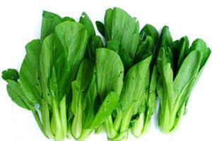 Cách dùng cải xanh trị ho tiêu đờm, trừ độc tiêu nhọt