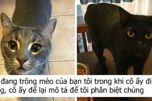 Cô gái trông mèo chia sẻ mô tả của người chủ về các 'boss', bạn sẽ không thể nhịn cười