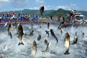 Thị trường thủy sản thuận lợi, APC vượt 76% kế hoạch lợi nhuận năm