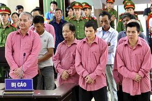 9 bị cáo trong vụ phá rừng lớn nhất ở Bình Định lãnh án 81 năm tù