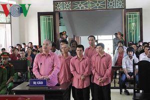 Tuyên án 9 bị cáo phá 64ha rừng ở Bình Định
