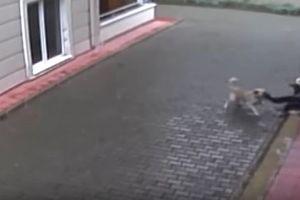 Hãi hùng trước cảnh cậu bé bị chó hoang lao vào cắn trên đường đi học về