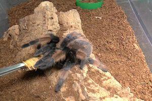 Những pha đớp mồi kinh hoàng của rết và nhện độc