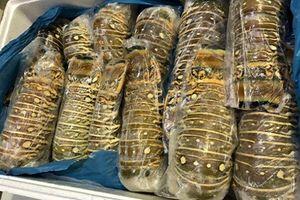 Đuôi tôm hùm Úc hơn 2 triệu đồng/kg hút khách nhà giàu Việt