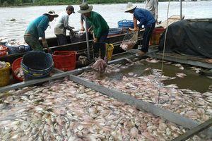 Hơn 160 tấn cá nuôi chết bất thường ở Tiền Giang