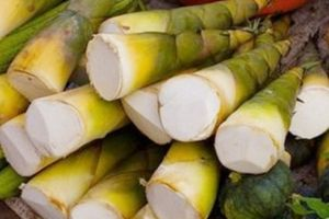 Chất xơ thực phẩm trong măng tre giúp giảm cân và ngừa tiểu đường