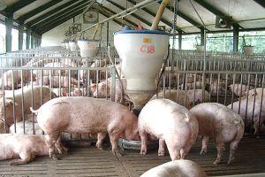 Sản xuất theo chuỗi: 'Chìa khóa' để phát triển chăn nuôi bền vững