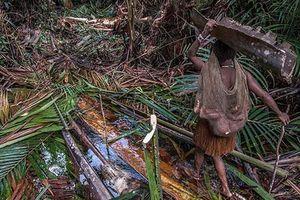 Bộ lạc nguyên thủy ở Indonesia lần đầu 'mở lòng' với thế giới