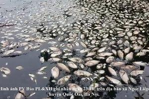 Xuất hiện tình trạng cá chết hàng loạt nghi bị nhiễm độc