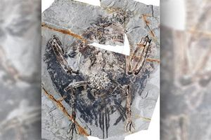 Phát hiện lá phổi chim cổ đại còn nguyên vẹn sau 120 triệu năm