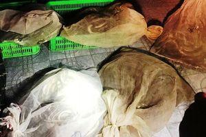 Hành khách được phen hoảng hốt khi biết hàng ngàn con rắn sống đang ngọ nguậy ngay dưới gầm xe khách giường nằm