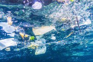 Phát hiện đầu tiên về vi hạt nhựa trong chất thải của con người
