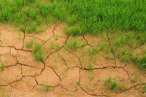 Cải thiện chất lượng phủ sóng các vấn đề môi trường ở châu Á-Thái Bình Dương