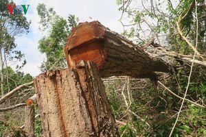 Bình Thuận yêu cầu kiểm điểm tập thể, cá nhân trong vụ phá rừng Tà Cú